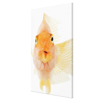 Tropical freshwater fish canvas print