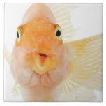 Tropical freshwater fish ceramic tiles