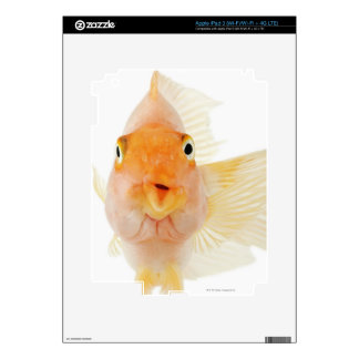 Tropical freshwater fish iPad 3 skin