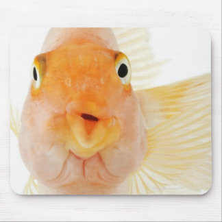 Tropical freshwater fish mouse pad