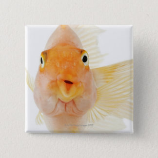 Tropical freshwater fish pinback button