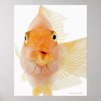 Tropical freshwater fish print