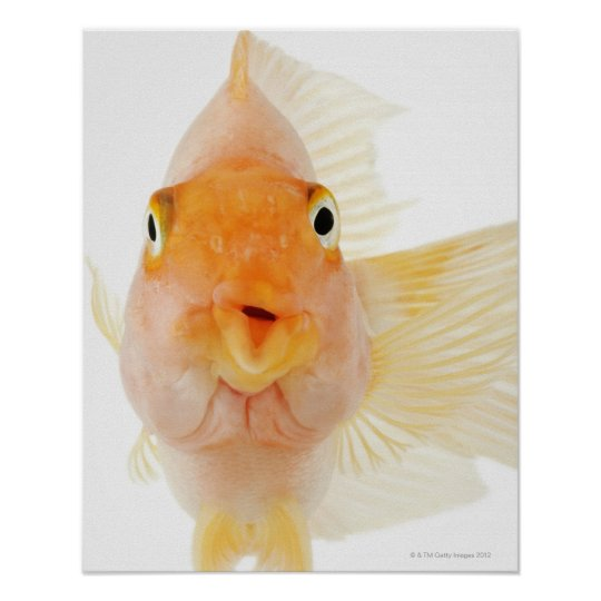Tropical freshwater fish poster