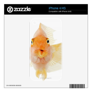Tropical freshwater fish iPhone 4 decal