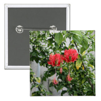 Tropical Fringed Coral Hibiscus Flower 2 Inch Square Button