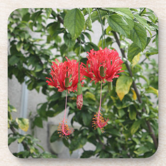 Tropical Fringed Coral Hibiscus Flower Coaster