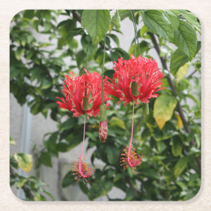 Tropical Fringed Coral Hibiscus Flower Square Paper Coaster