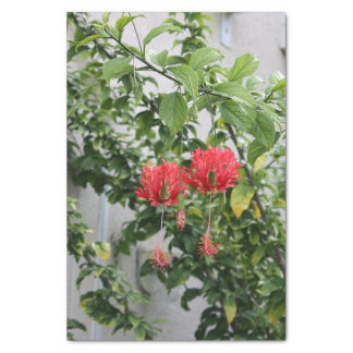 Tropical Fringed Coral Hibiscus Flower Tissue Paper