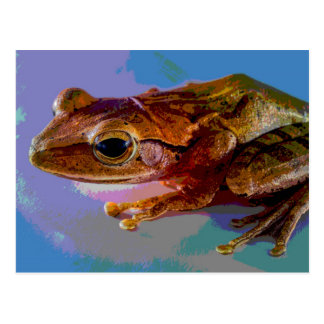 Tropical Frog Postcard / Mini Art Print