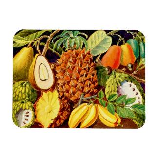 Tropical Fruit Illustration 1937 - Magnet 1 Rectangle Magnet
