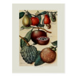 Tropical Fruits Postcard