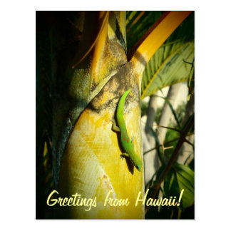 Tropical gecko Hawaiian greetings postcard