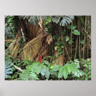Tropical Grandeur Poster