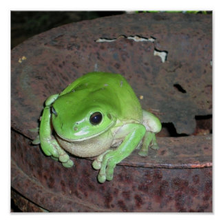 Tropical Green Tree Frog Posters