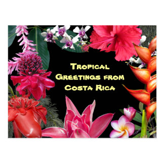 Tropical Greetings from Costa Rica Postcard