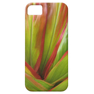 Tropical Hawaii Ti Leaf iPhone Cover iPhone 5 Covers