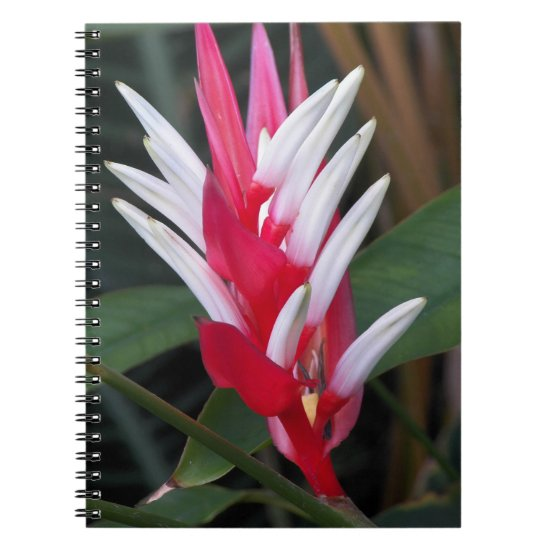 Tropical Heliconia Floral Notebook