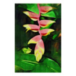 Tropical Heliconia - Lobster Claw  Poster