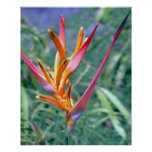 TROPICAL HELICONIA POSTERS