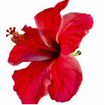 Tropical Hibiscus Flower Acrylic Cut Out