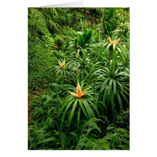 Tropical Hiking Trail Card