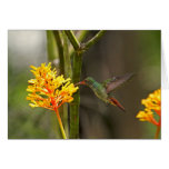 Tropical Hummingbird and Flower Greeting Card