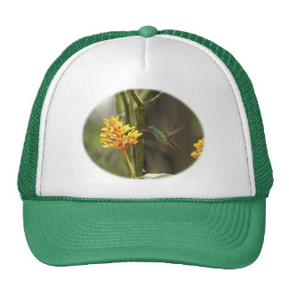 Tropical Hummingbird and Flower Hats