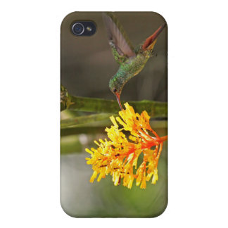 Tropical Hummingbird and Flower iPhone 4 Cover