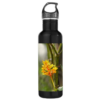 Tropical Hummingbird and Flower Stainless Steel Water Bottle