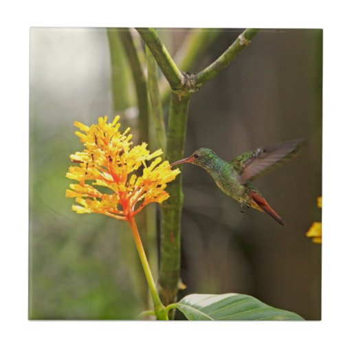 Tropical Hummingbird and Flower Tile