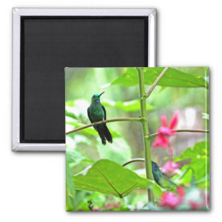 Tropical Hummingbird and Flowers 2 Inch Square Magnet
