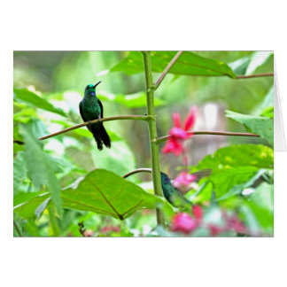 Tropical Hummingbird and Flowers Cards