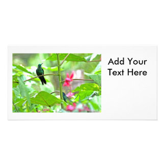 Tropical Hummingbird and Flowers Picture Card