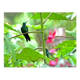 Tropical Hummingbird and Flowers Postcard