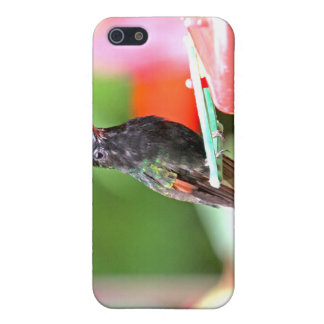 Tropical Hummingbird at Feeder iPhone 5 Case