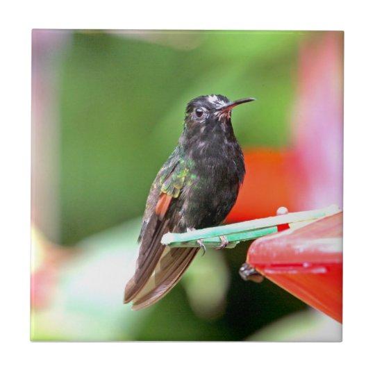 Tropical Hummingbird at Feeder Tile