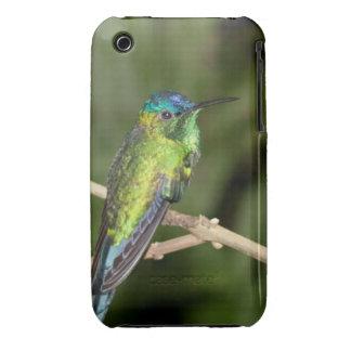 Tropical Hummingbird iPhone 3G/3GS Case iPhone 3 Case-Mate Case
