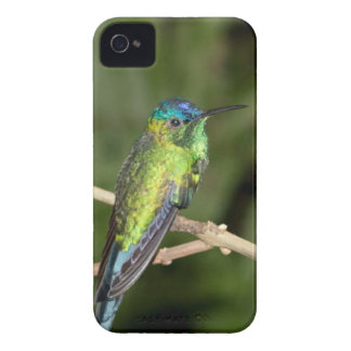 Tropical Hummingbird iPhone 4 Case
