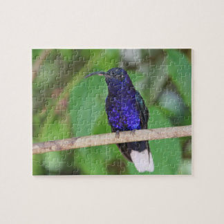 Tropical Hummingbird Jigsaw Puzzle
