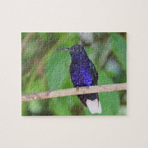 Tropical Hummingbird Jigsaw Puzzle