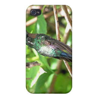 Tropical Hummingbird Picture iPhone 4 Cover