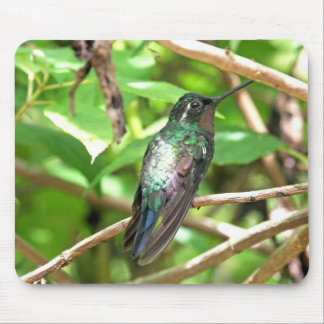 Tropical Hummingbird Picture Mouse Pad