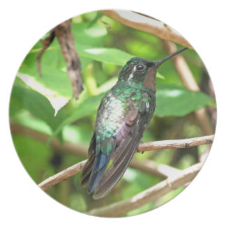 Tropical Hummingbird Picture Dinner Plate