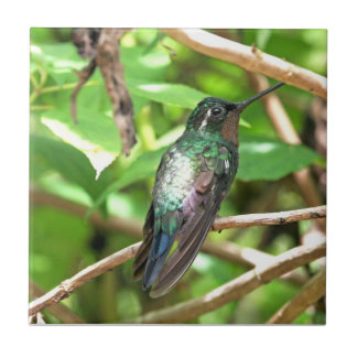 Tropical Hummingbird Picture Tile