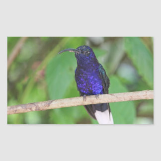 Tropical Hummingbird Rectangular Sticker