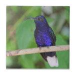 Tropical Hummingbird Tile
