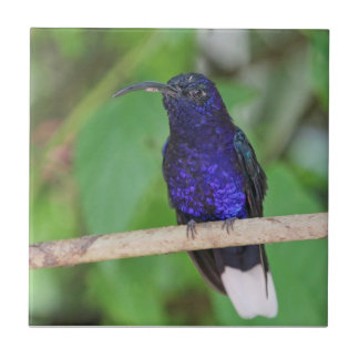Tropical Hummingbird Tile