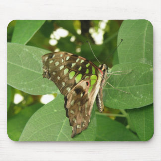 Tropical Iridescent Green Butterfly Mousepad