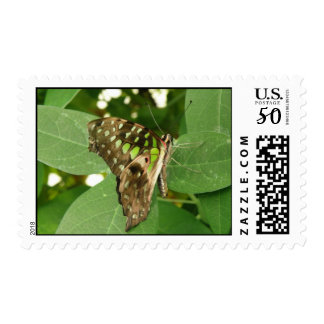 Tropical Iridescent Green Butterfly Postage Stamp