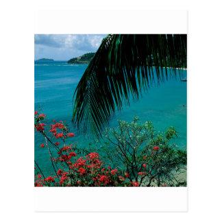 Tropical Island Friendship Bay Bequia Postcard